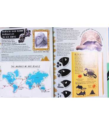 Ten Thousand, Eight Hundred and Twenty Endangered Species in the Animal Kingdom Inside Page 2