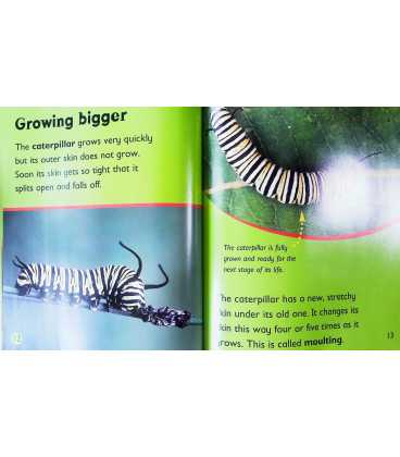 From Caterpillar to Butterfly Inside Page 2