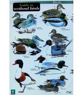 Guide to Wetland Birds